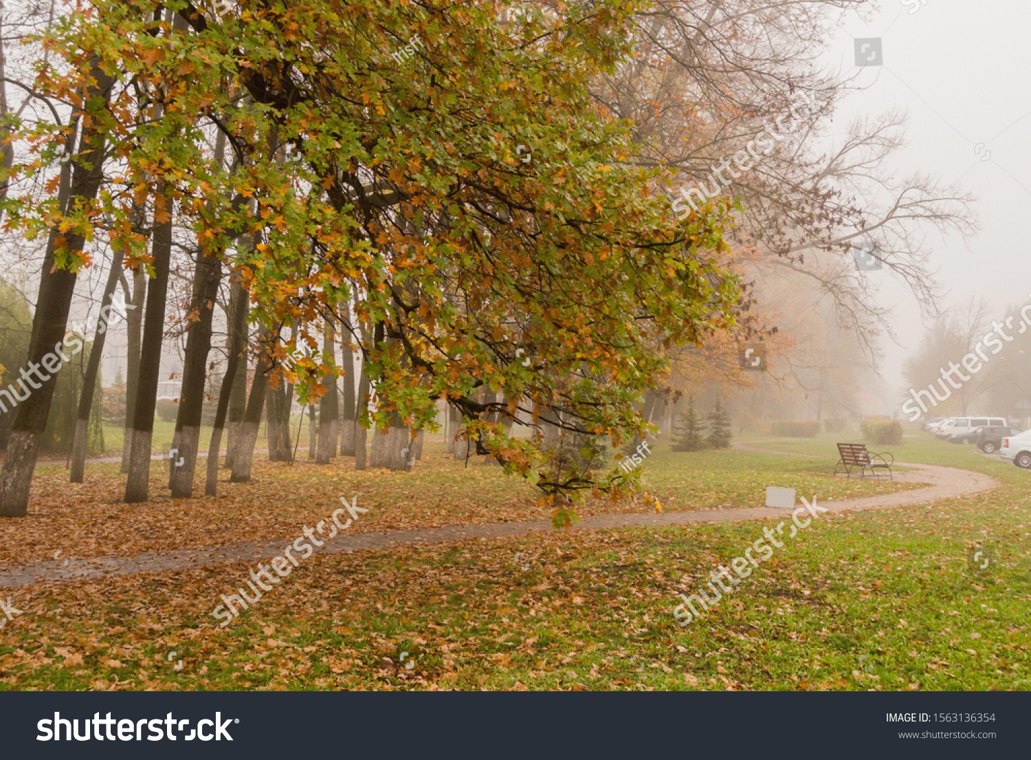 Urban Park landscape. Large autumn trees with yellow and green leaves leaned toward the winding path on a misty morning. Bench in the background