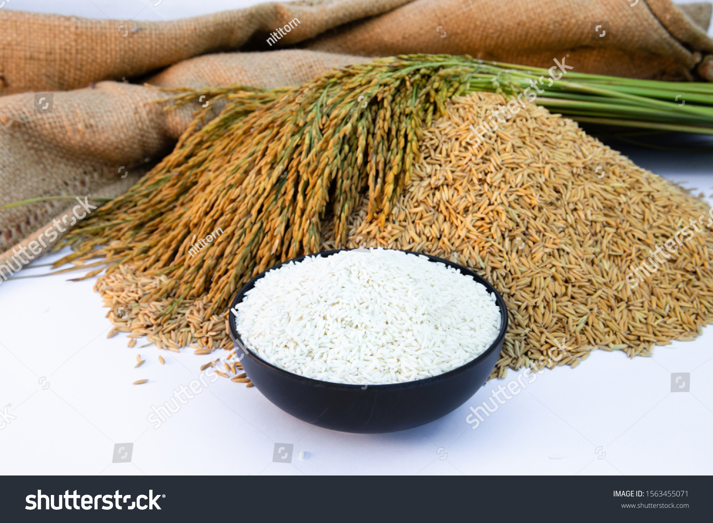 White Rice Paddy Rice Bowl Rice Stock Photo Edit Now 1563455071