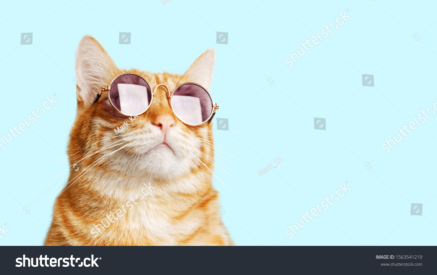 Closeup portrait of funny ginger cat wearing sunglasses isolated on light cyan. Copyspace. #1563541219