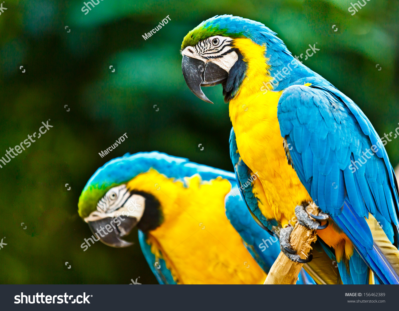 Blue Macaw Parrots In Atlanta 100