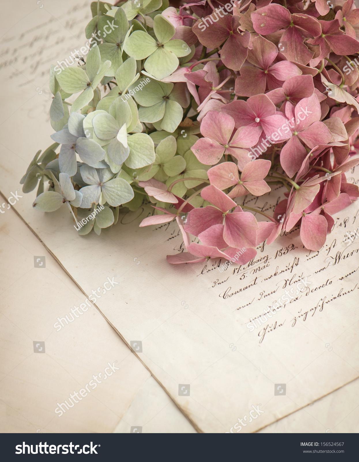Old Love Letters Garden Flowers Hydrangea Stock