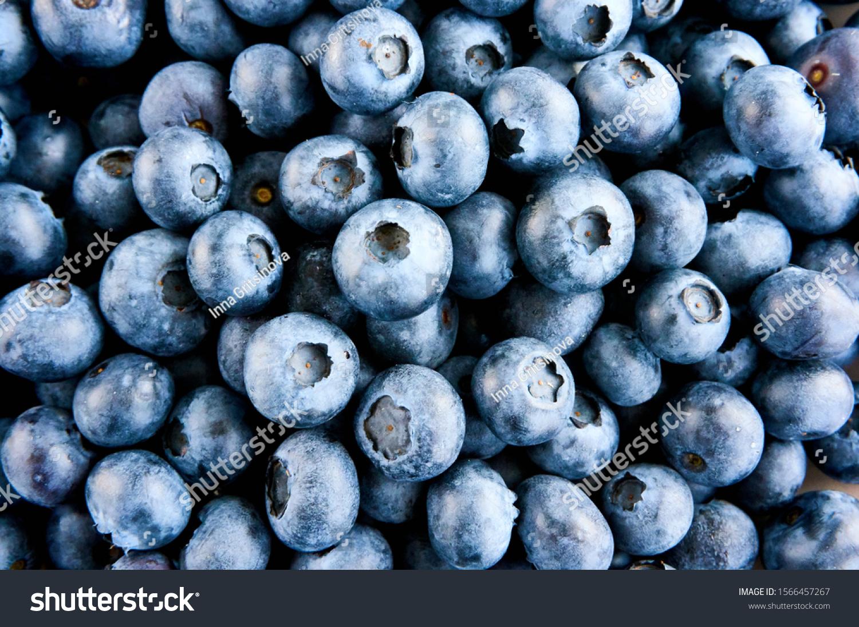 stock-photo-freshly-picked-blueberries-i