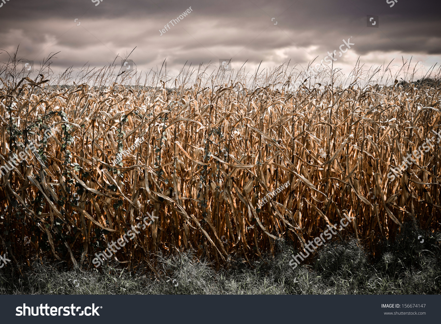 Sod Field Stock Photos, Images, & Pictures | Shutterstock