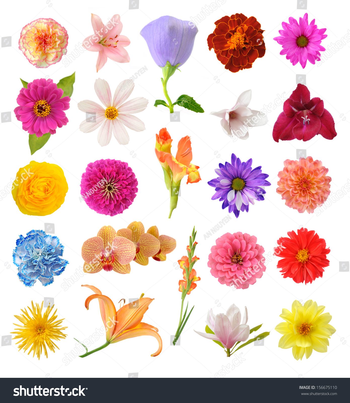Mix Flowers Isolated On White Background Stock Photo Royalty Free