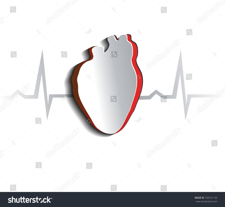 Shape of the heart anatomy