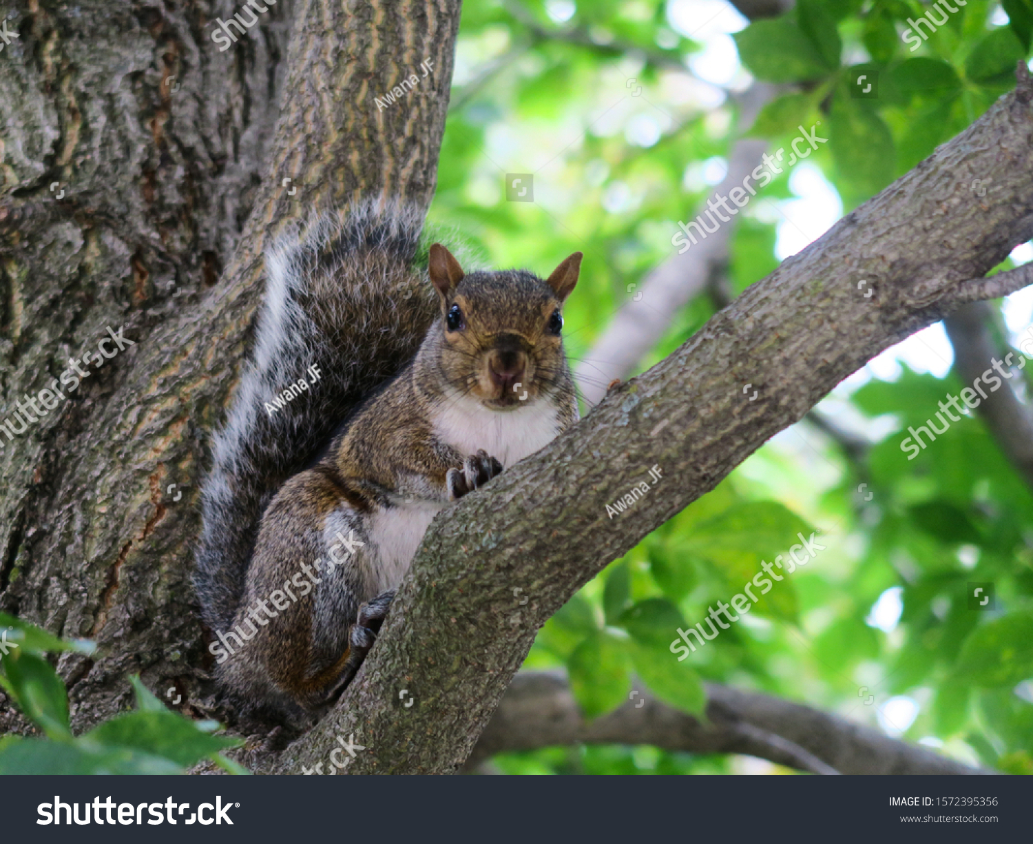 Cute squirrel on a tree branch