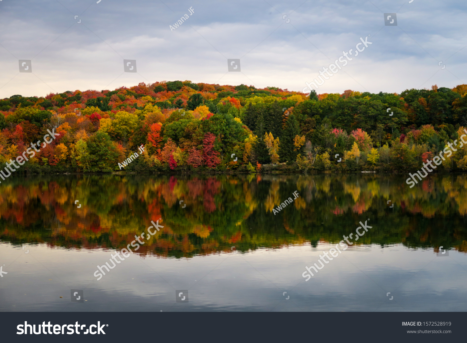 stock-photo-colorful-and-autumnal-trees-
