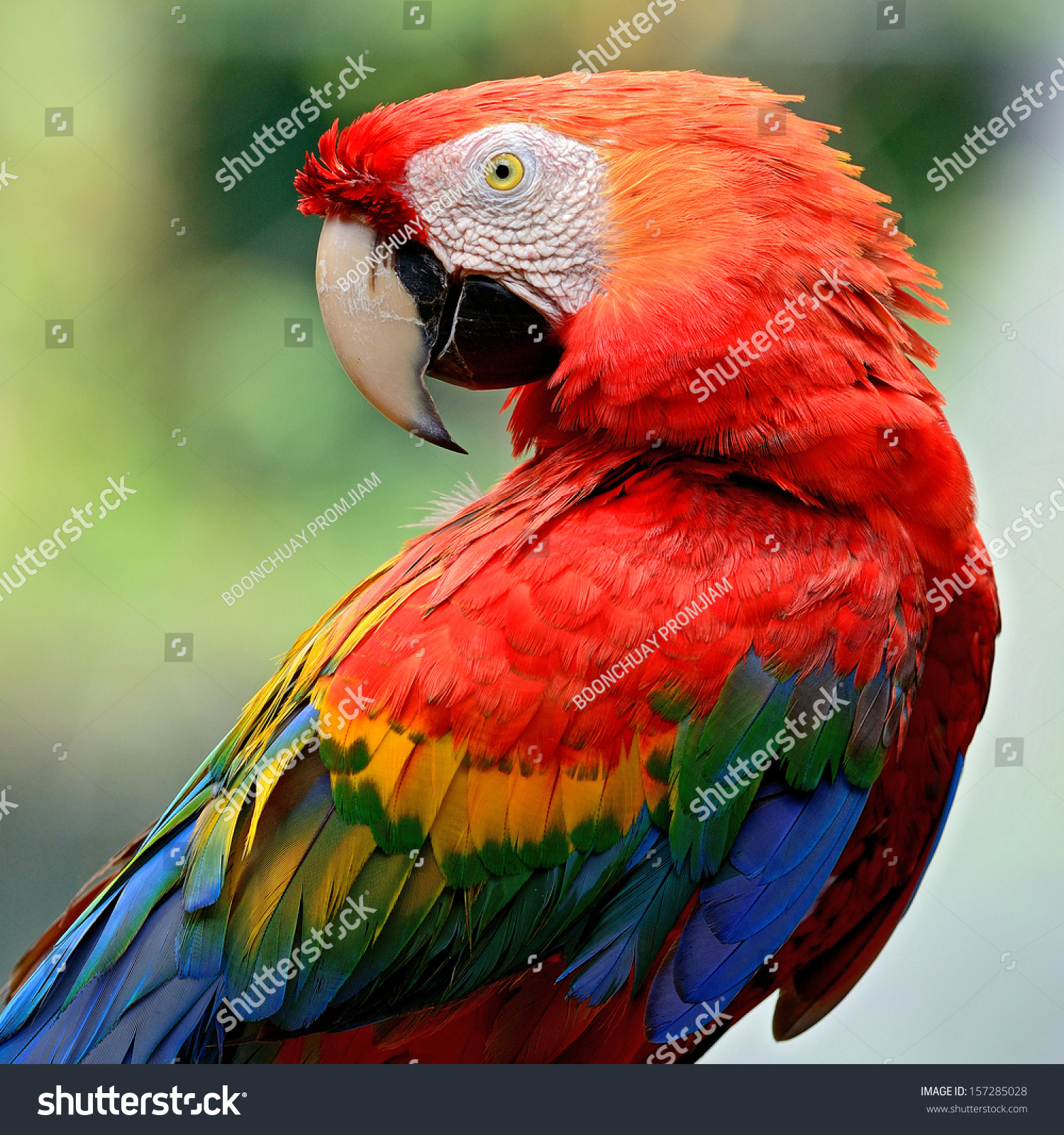 Macaw Eating Images &- Stock Pictures. Royalty Free Macaw Eating ...