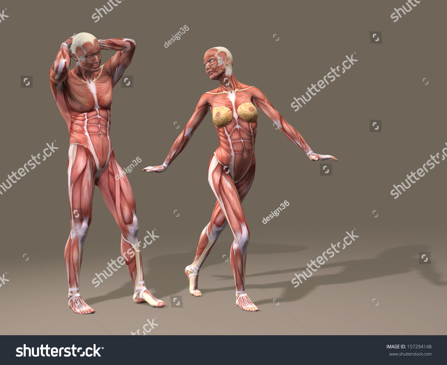 Concept Conceptual Human Man Woman Couple Stock Illustration ...