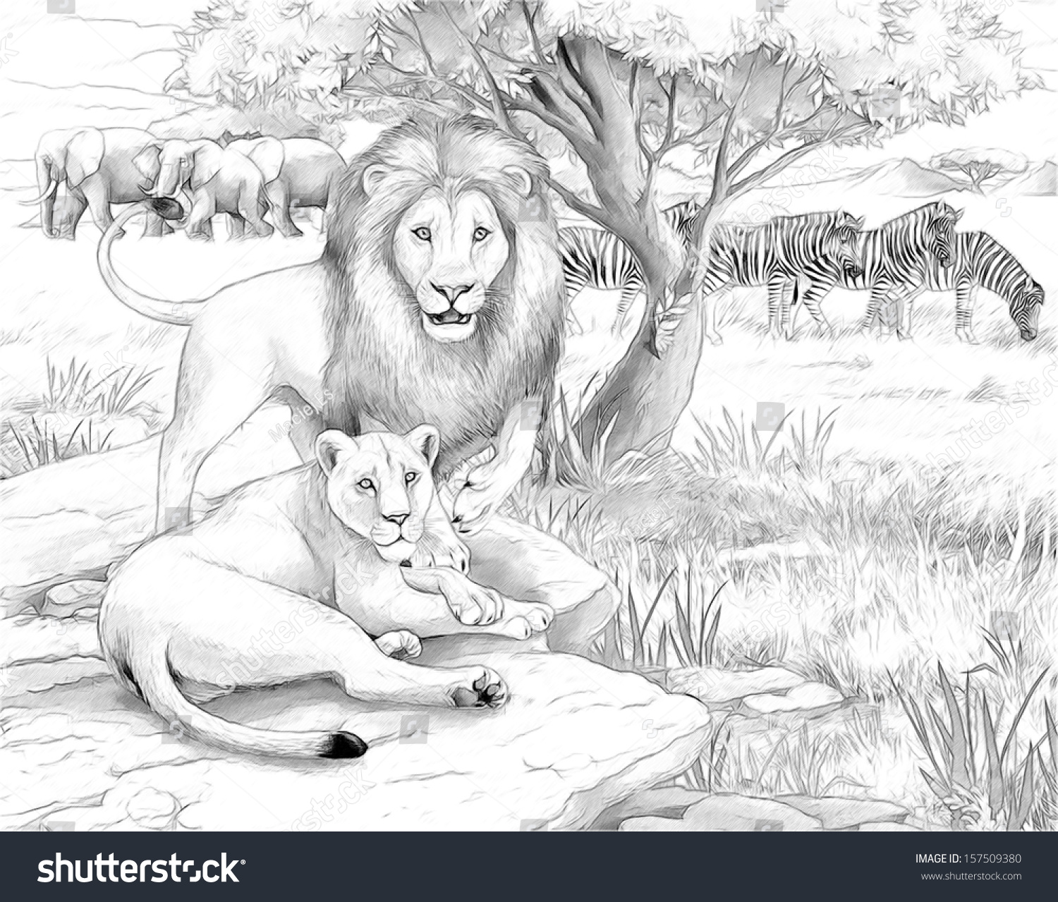 safari lion coloring page illustration for the children - Safari Coloring Pages
