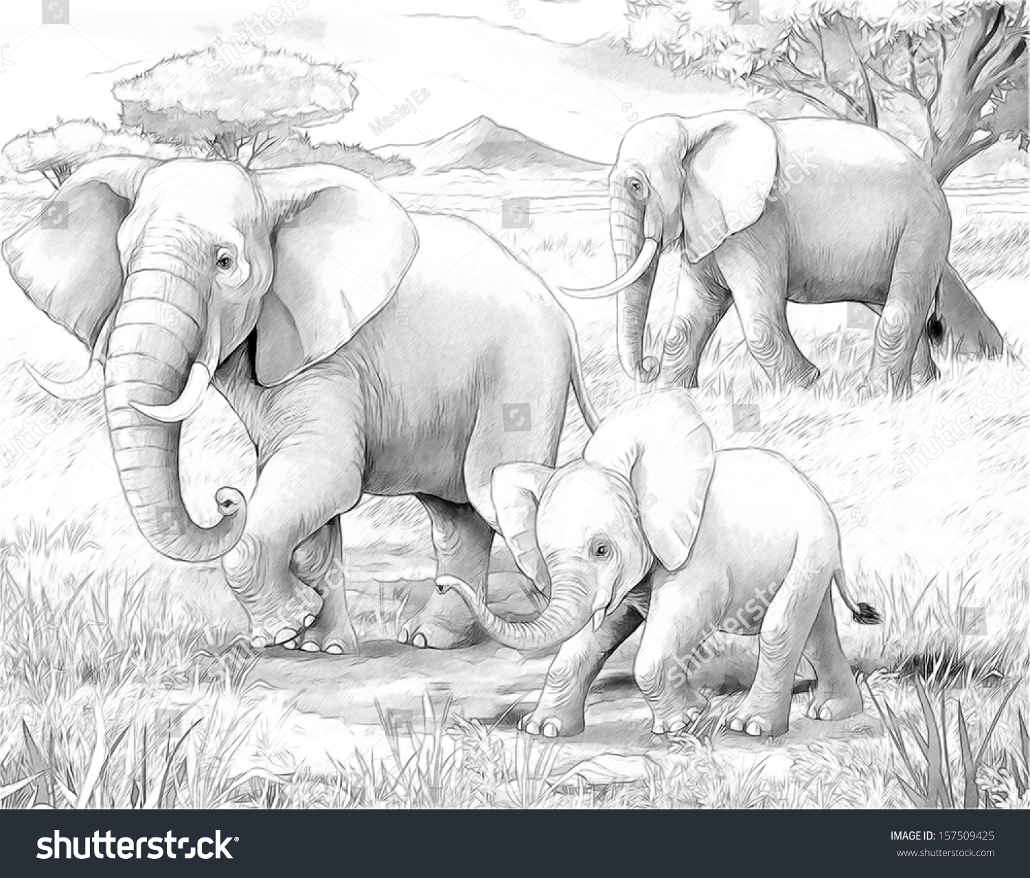 100 elephants coloring pages for kids zoo zoo animals