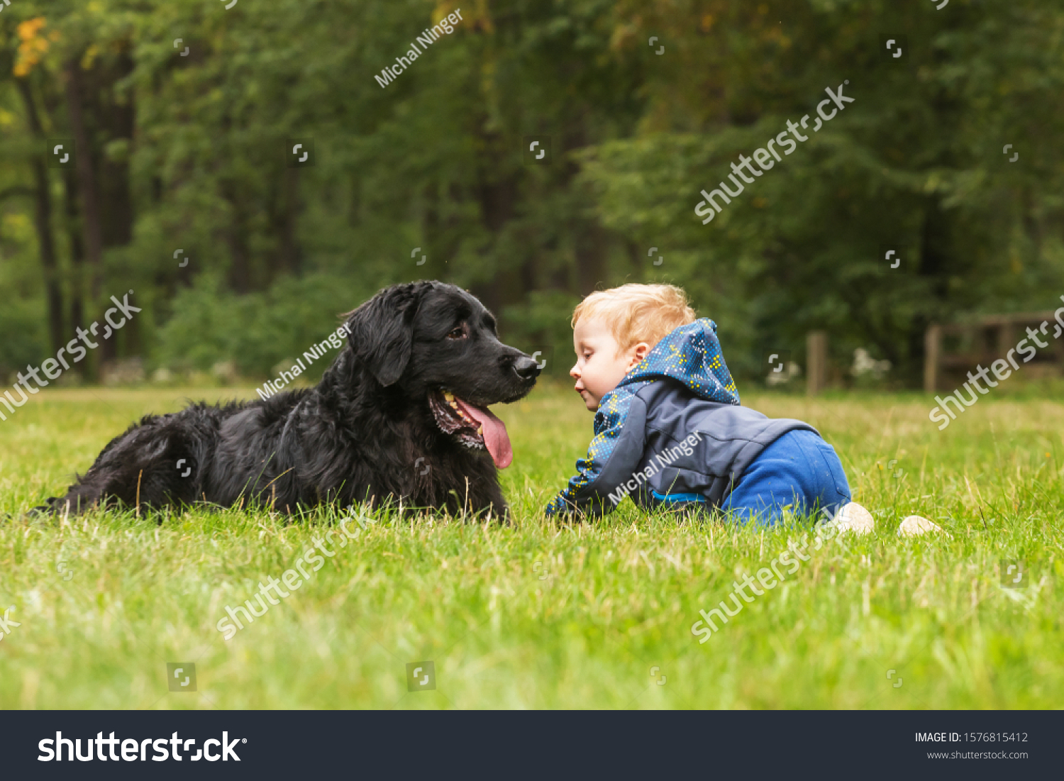 Small boy and dog hovawart