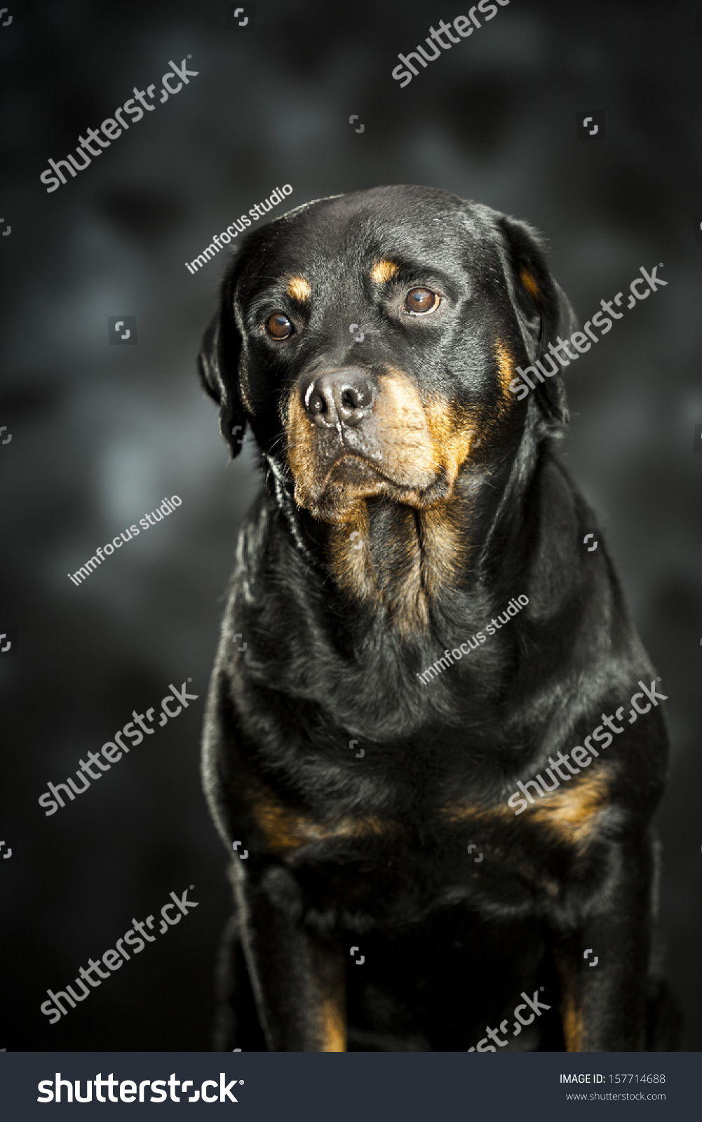 how to train a rottweiler to be friendly