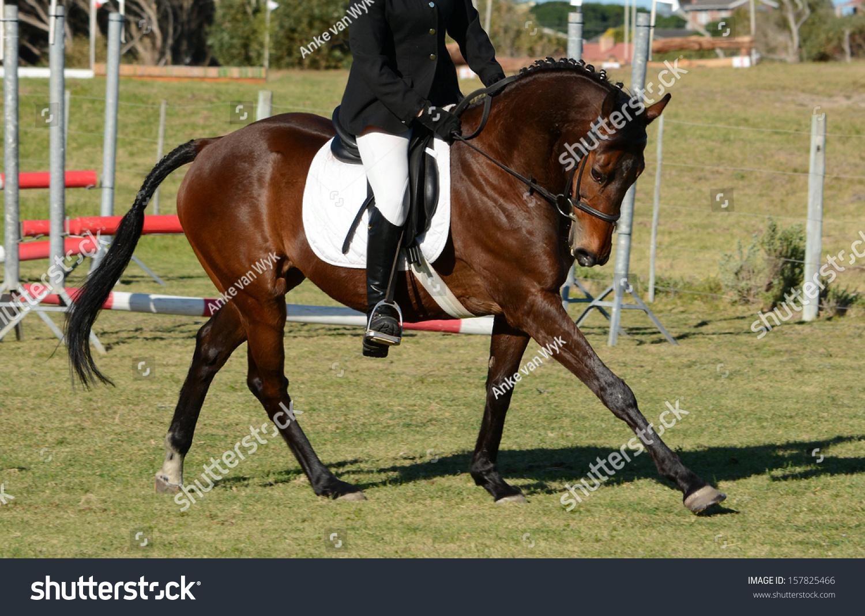 Dark bay horse jumping