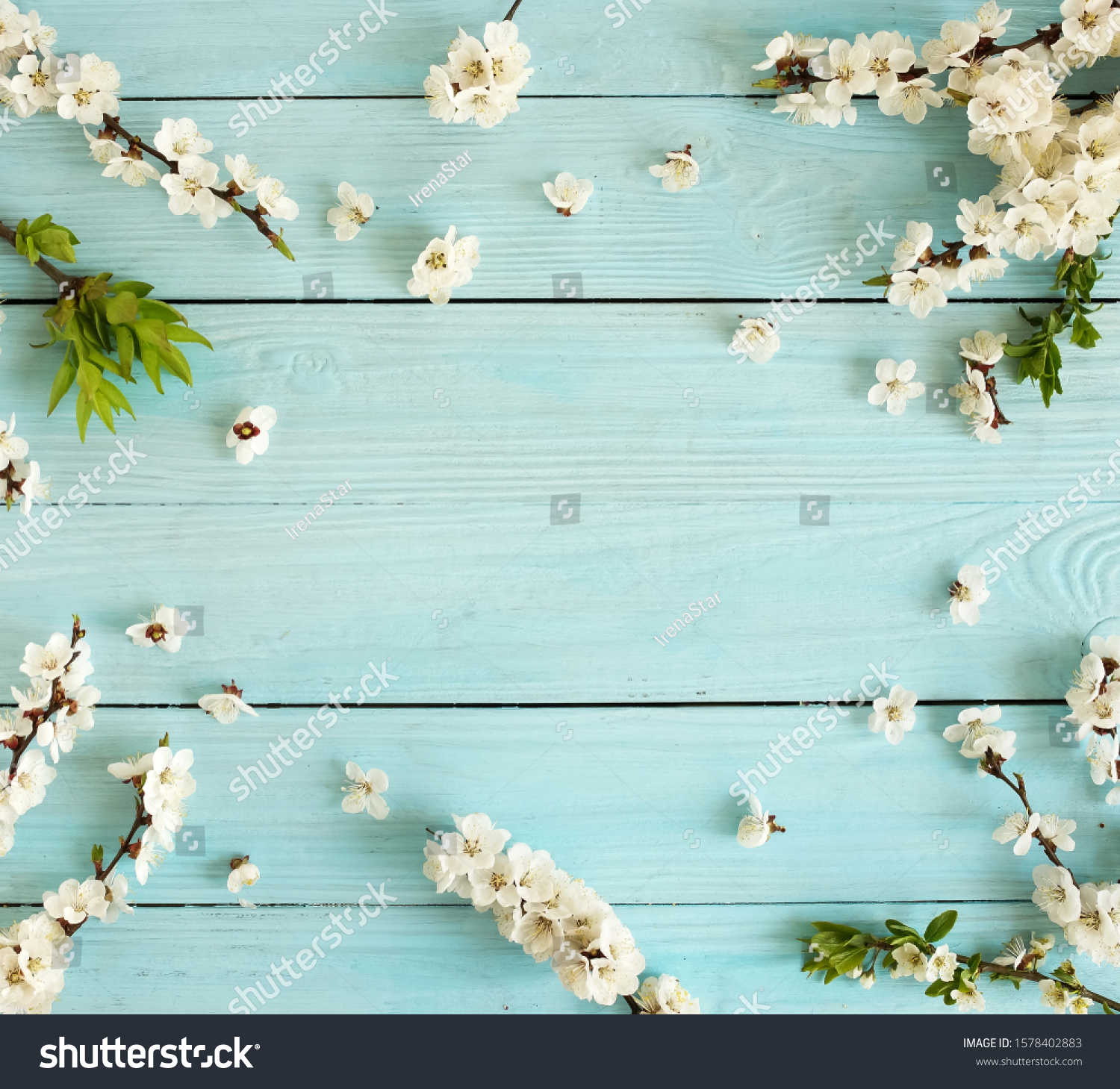 Spring background .cherry blossom flowers  on blue wooden backdrop top view . copy space. #1578402883