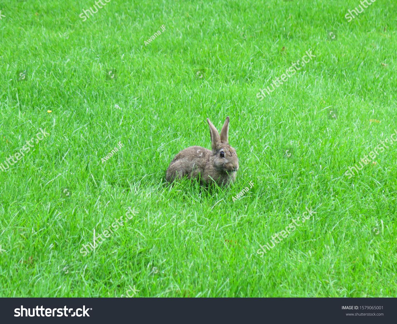 stock-photo-cute-rabbit-on-a-green-grass