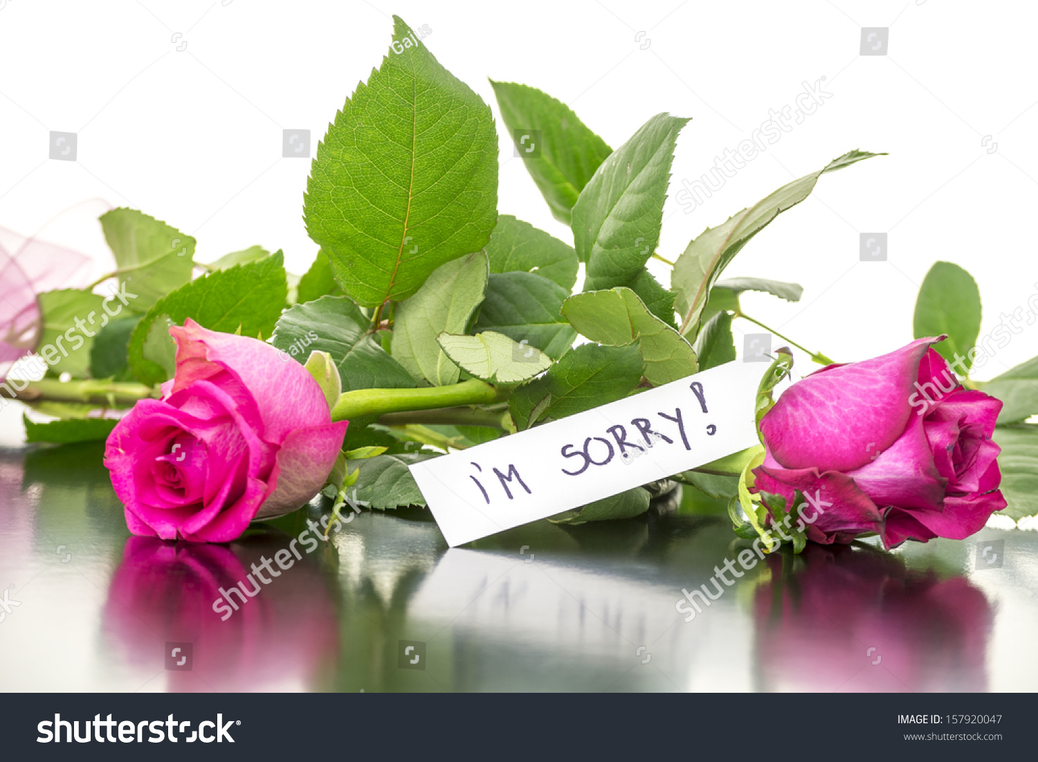 Two Beautiful Pink Roses Sorry Message Stock Photo Edit Now