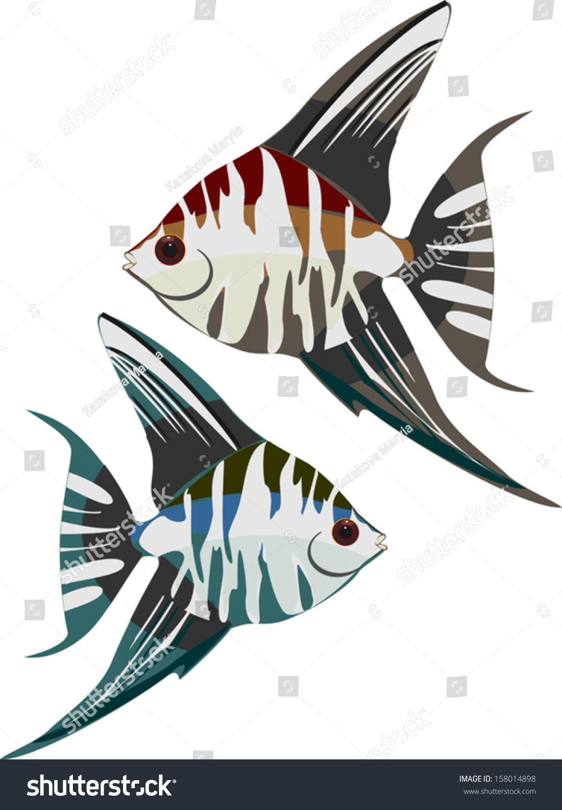 Freshwater aquarium fish angelfish - Altum Angelfish Or Orinoco Angelfish Freshwater Aquarium Fish