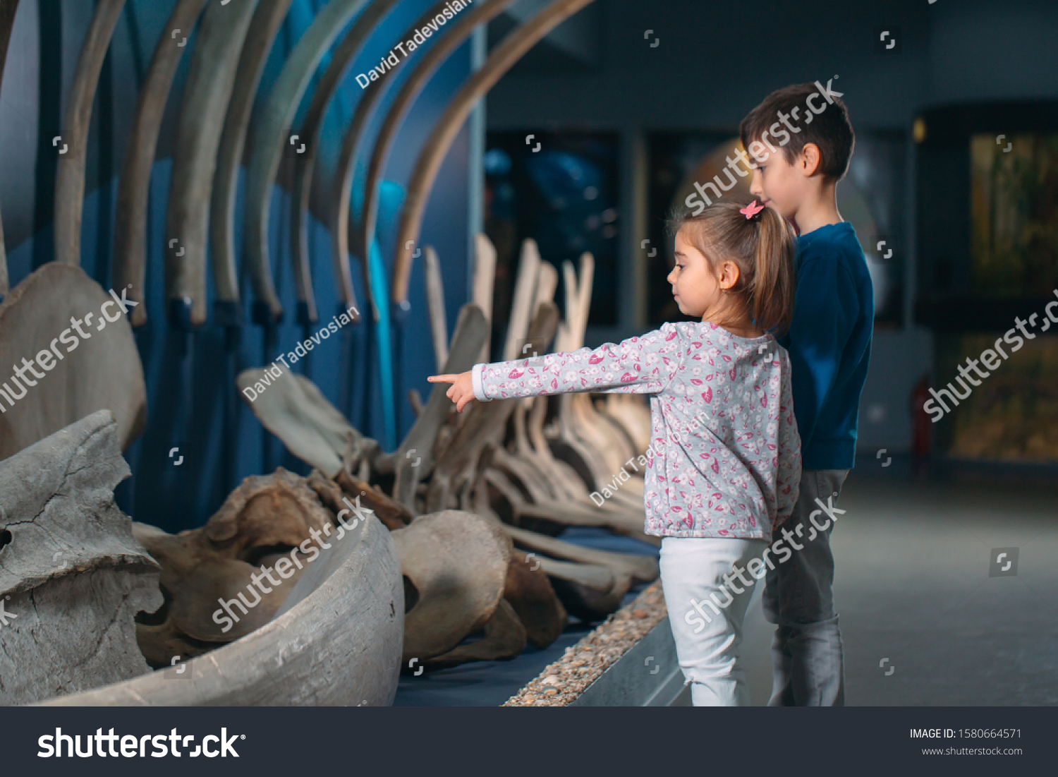 Children look at the skeleton of an ancient whale in the Museum of paleontology #1580664571