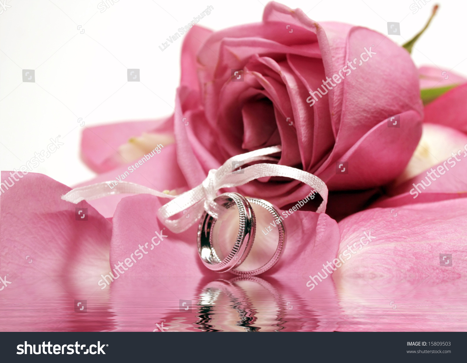 Two Wedding Bands On Bed Pink Stock Photo (Edit Now) 15809503 ...