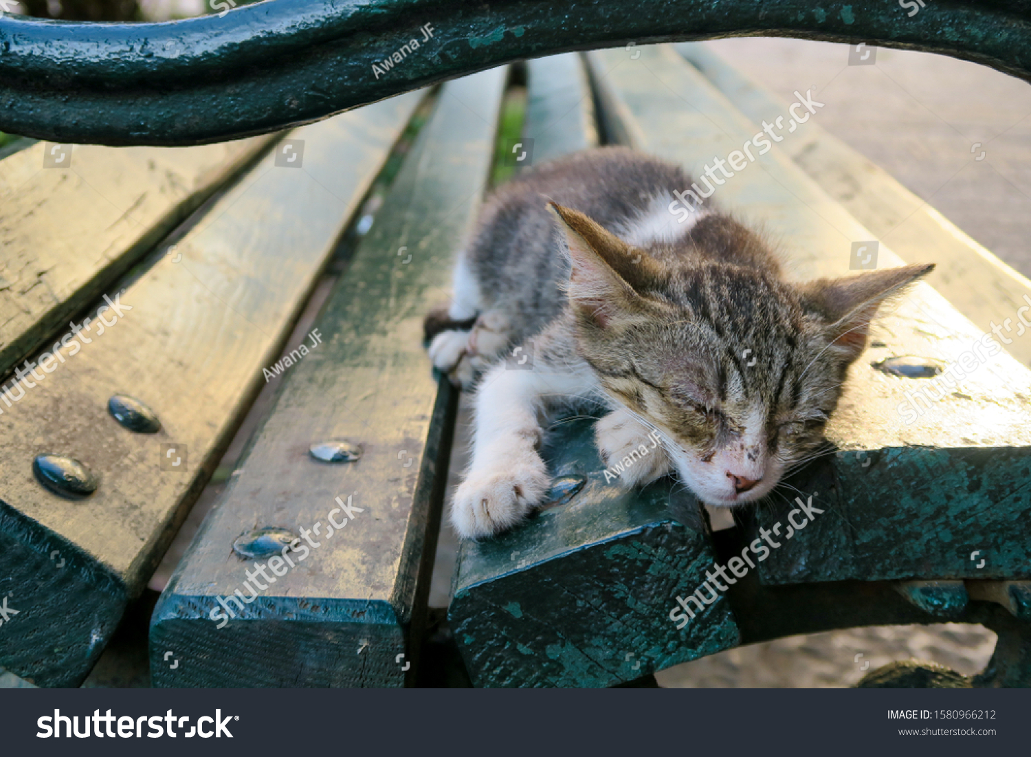 stock-photo-cute-cate-sleeping-on-a-benc