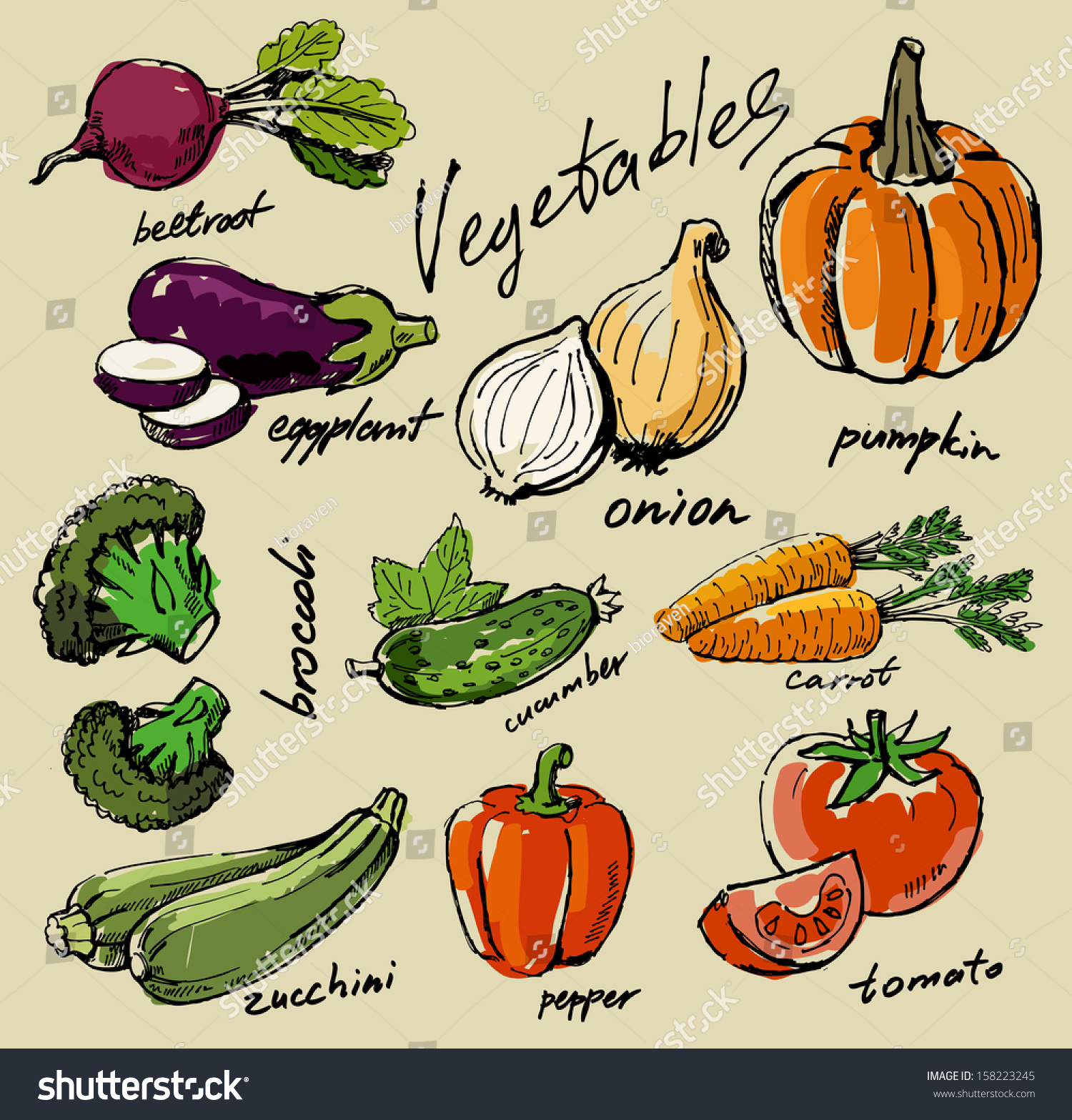 hand drawn fresh color vegetables on beige #158223245