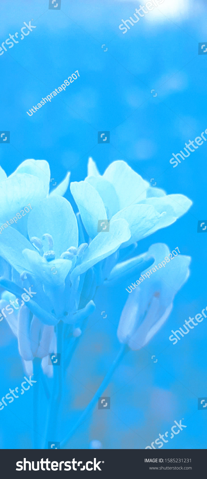 stock photo blue and white samsung galaxy a wallpaper 1585231231