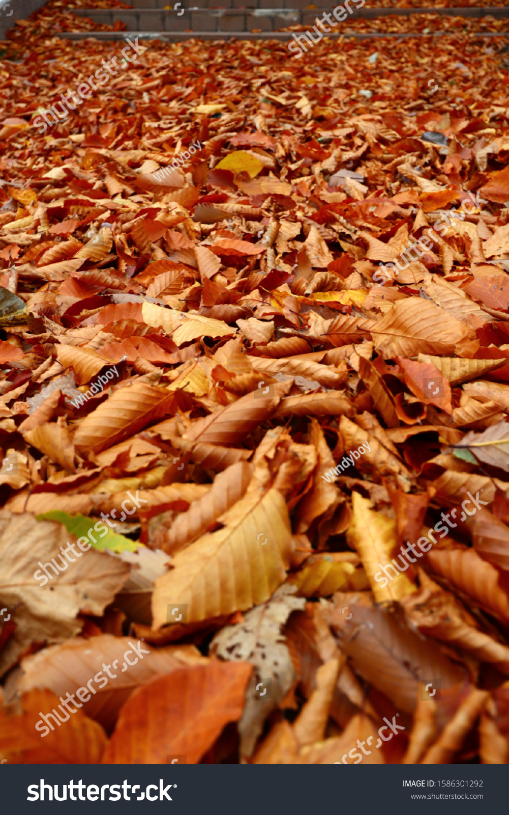 Fall leaves on the ground #1586301292