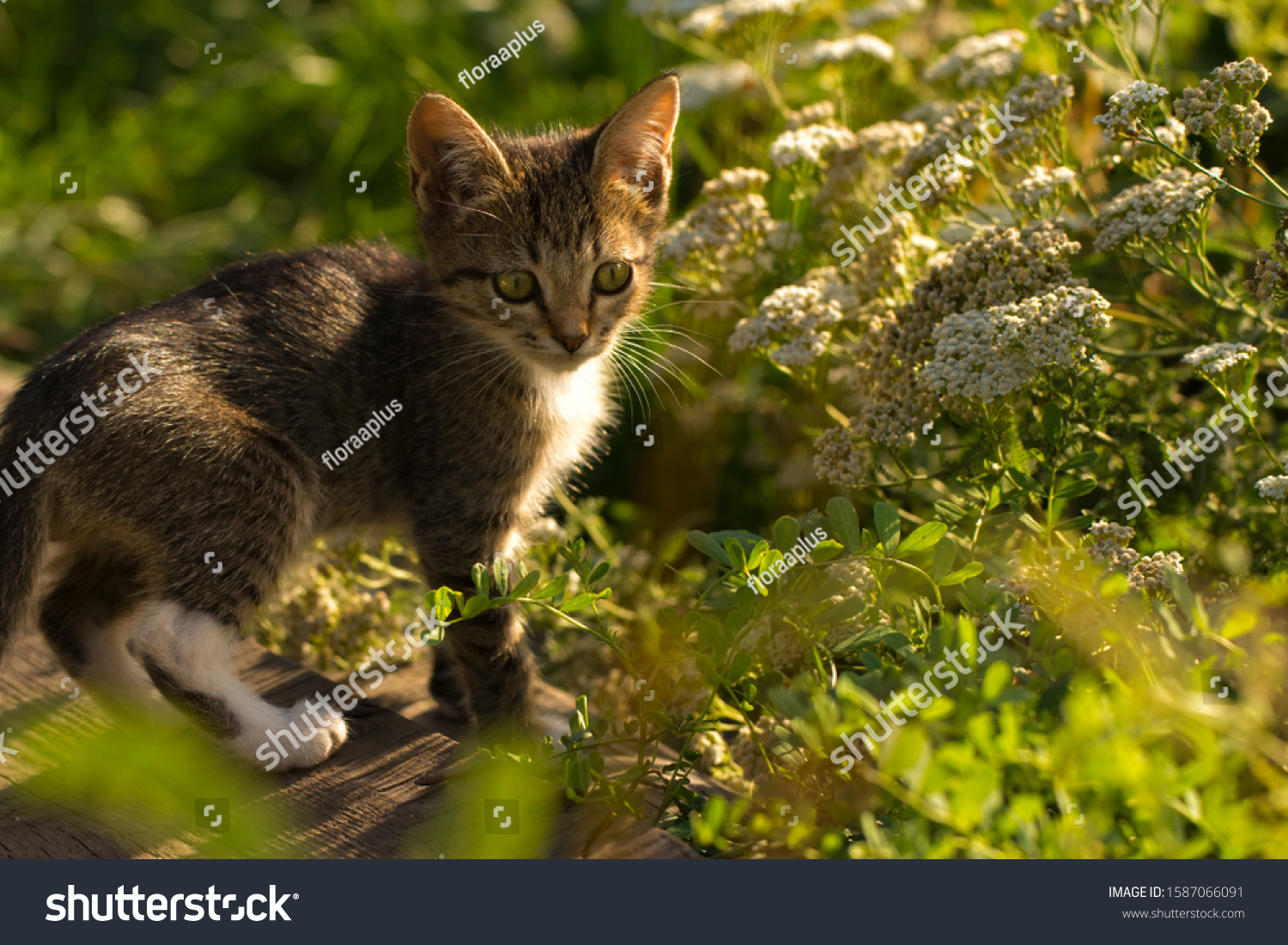 stock-photo-a-little-grey-striped-kitten