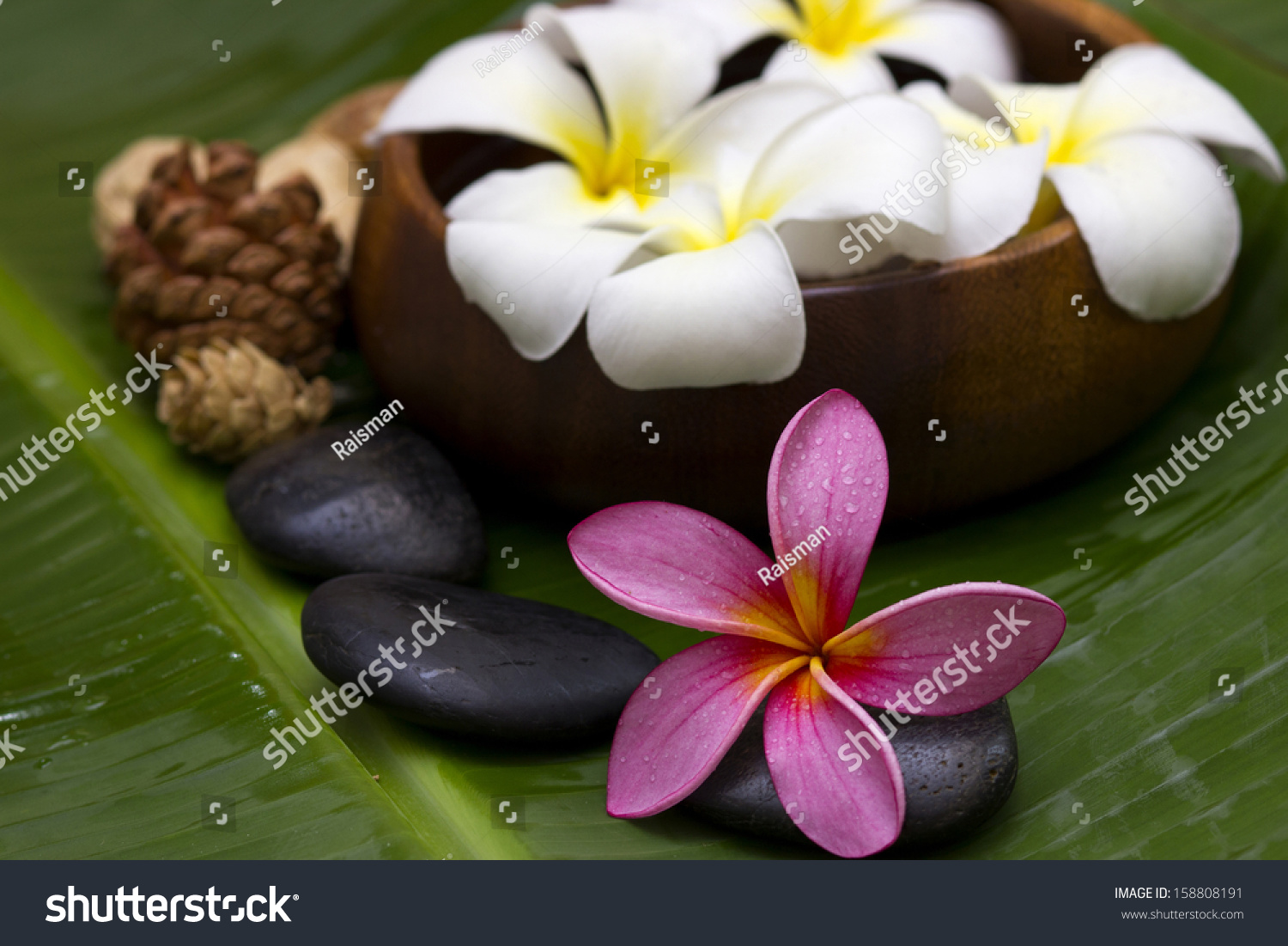 Red Pink Frangipani With Spa Concept Stock Photo 158808191