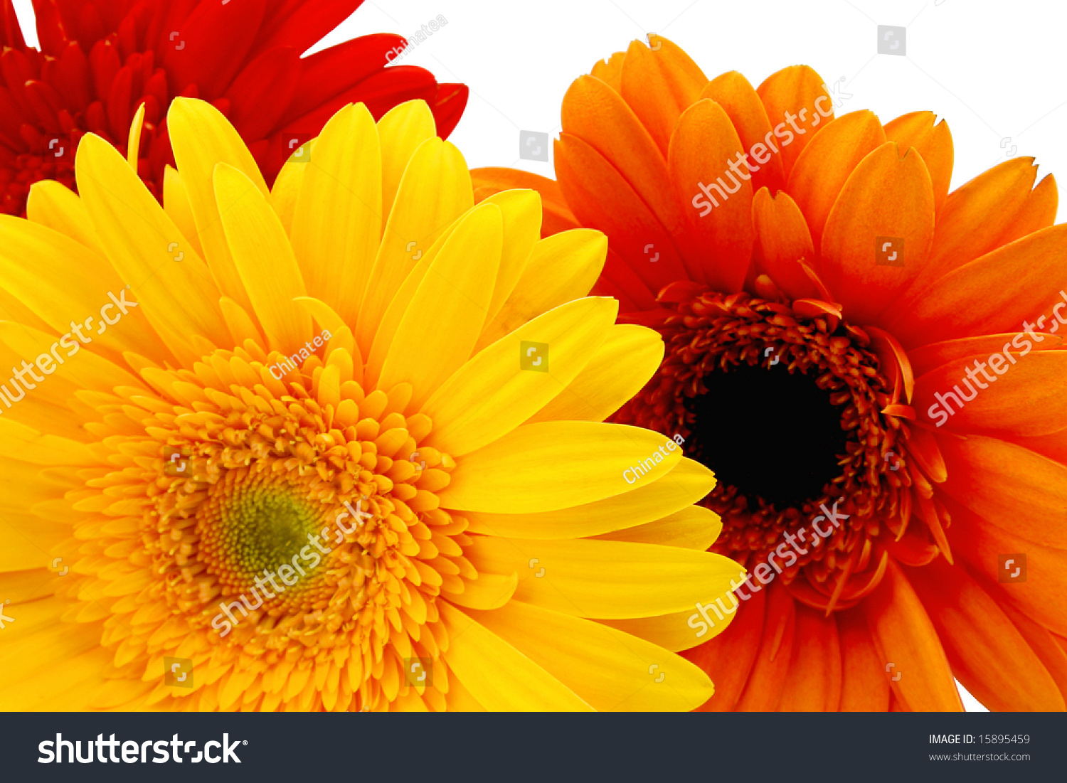 Red Orange Yellow Flowers Stock Photo Safe To Use 15895459
