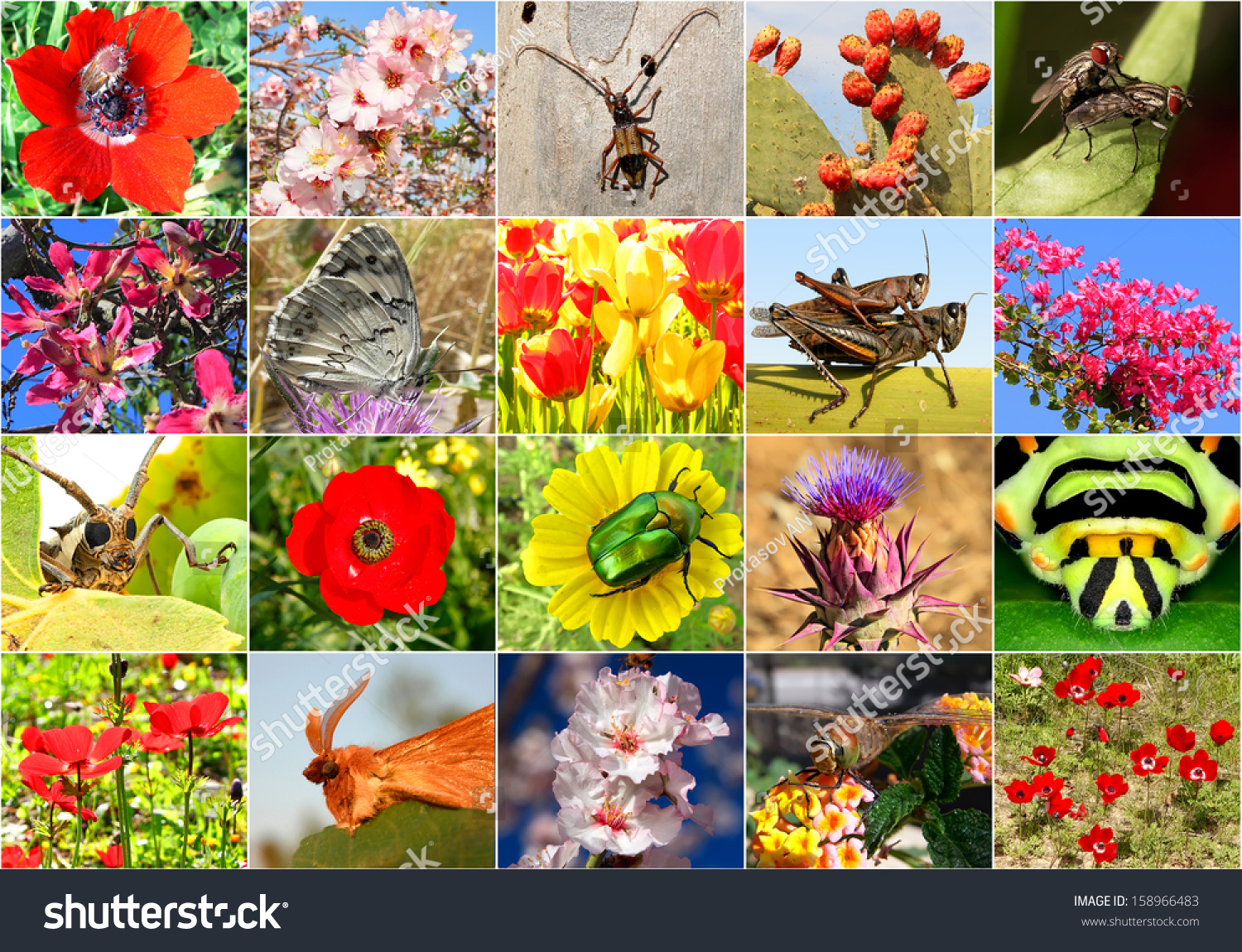 Biodiversity Collage All Nonagricultural Value Plants Foto de stock ...