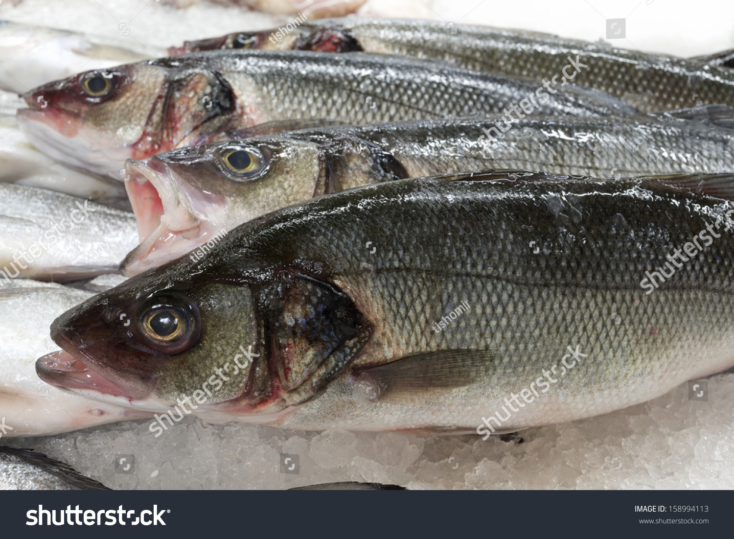 Freshwater fish dace - Sea Dace Fish On Ice Fish Background Macro Fish