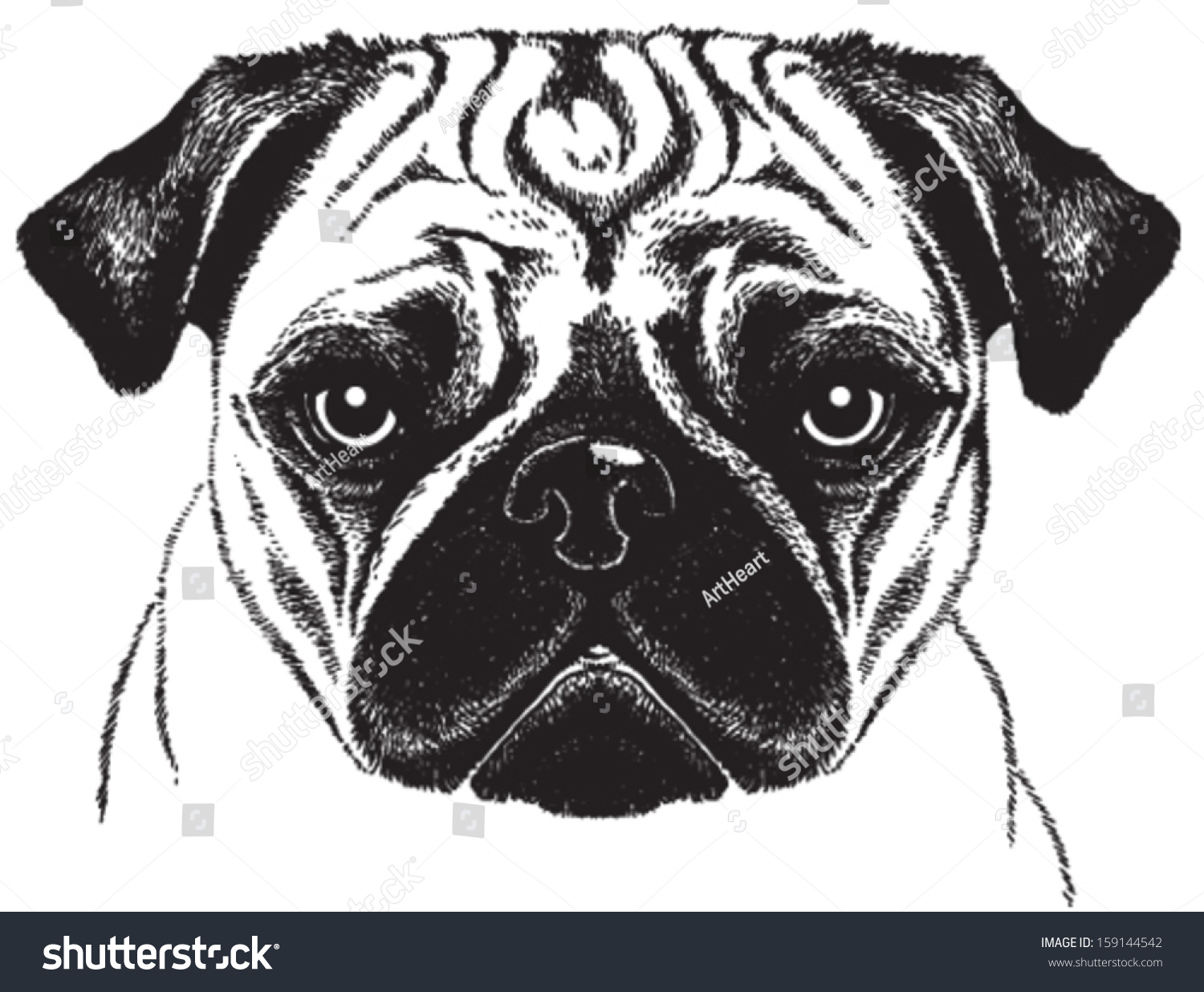 Notebook And Pen Sketch Stock Vector Art More Images Of: Black White Vector Sketch Fawn Pugs Stock Vector 159144542