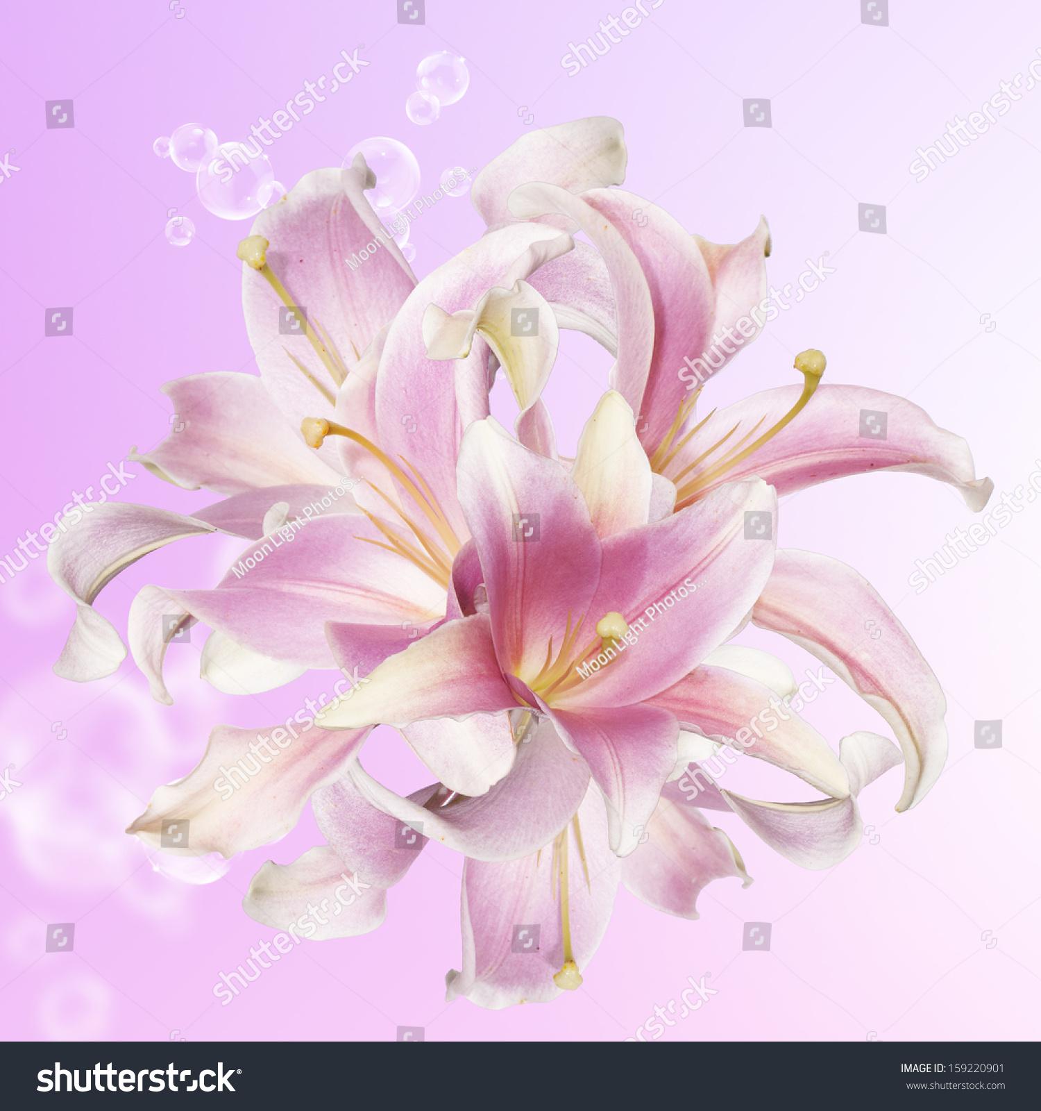 Beautiful flower card lily ez canvas id 159220901 izmirmasajfo