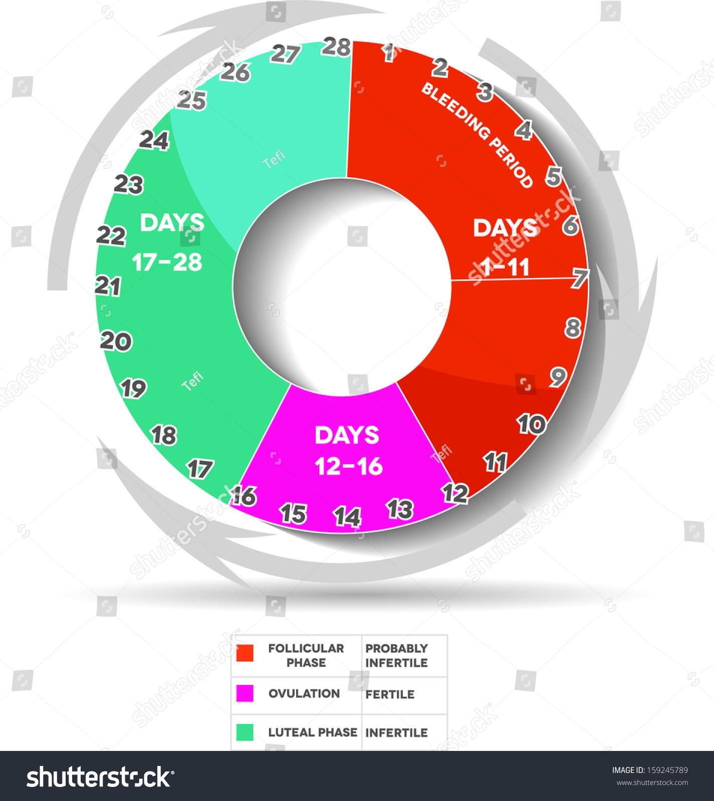 Menstrual Calendar Average Menstrual Cycle Twenty Stock ...