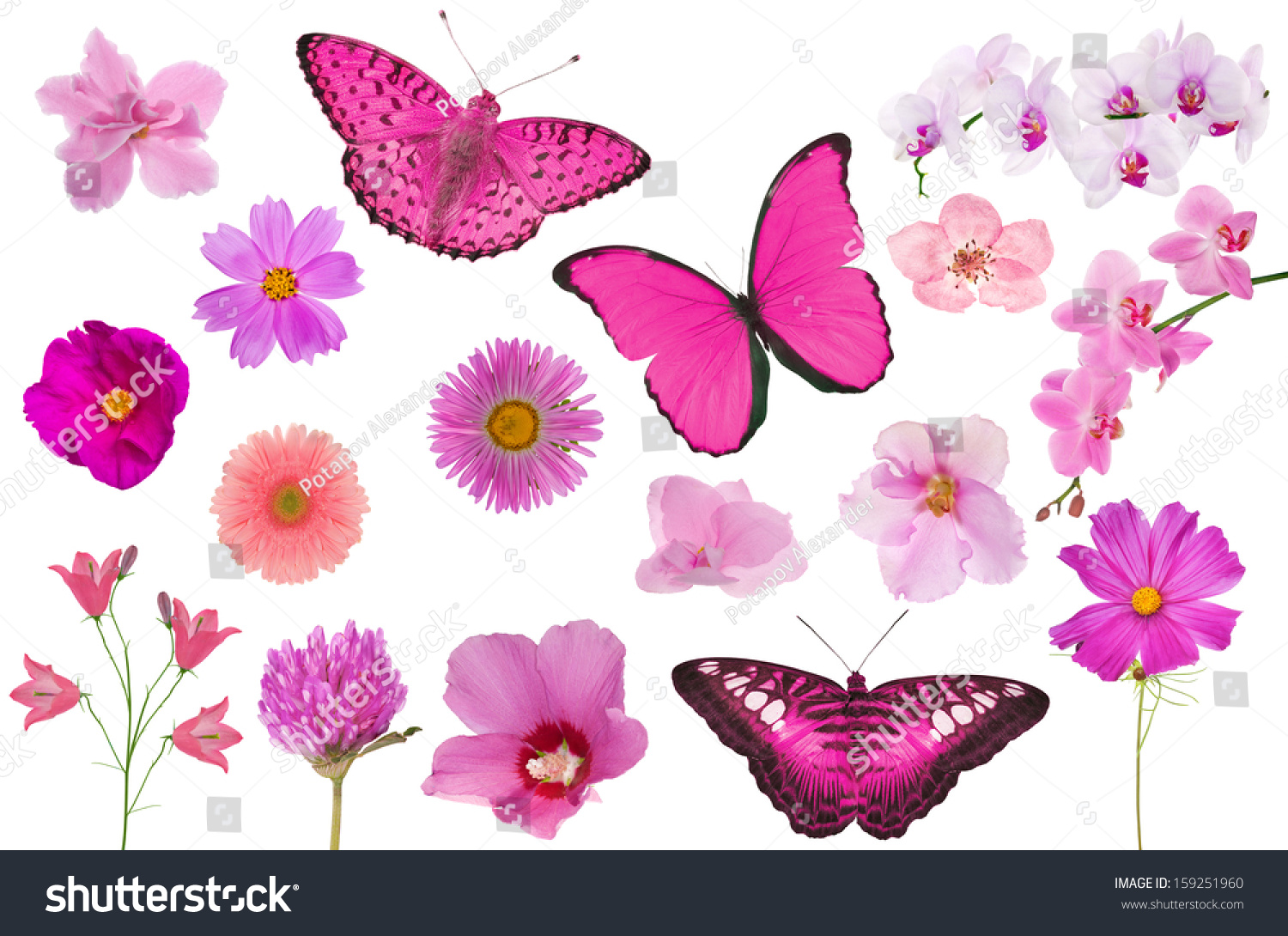 Set Pink Color Flowers Butterflies Isolated Stock Photo Edit Now
