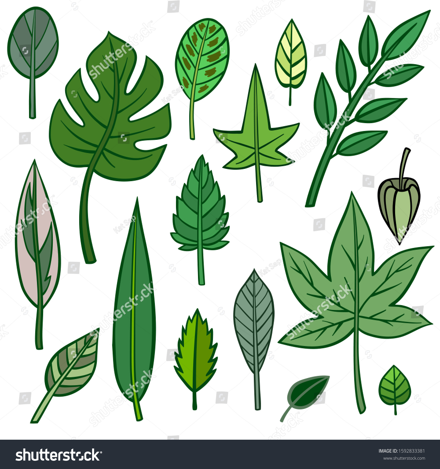 Set Different Hand Drawn Different Plants Stock Vector Royalty