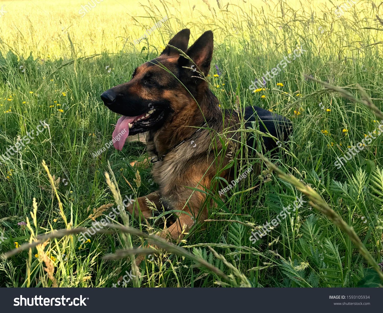 Schlafstrampler Dogs Gr/ö/ße 56-74 56