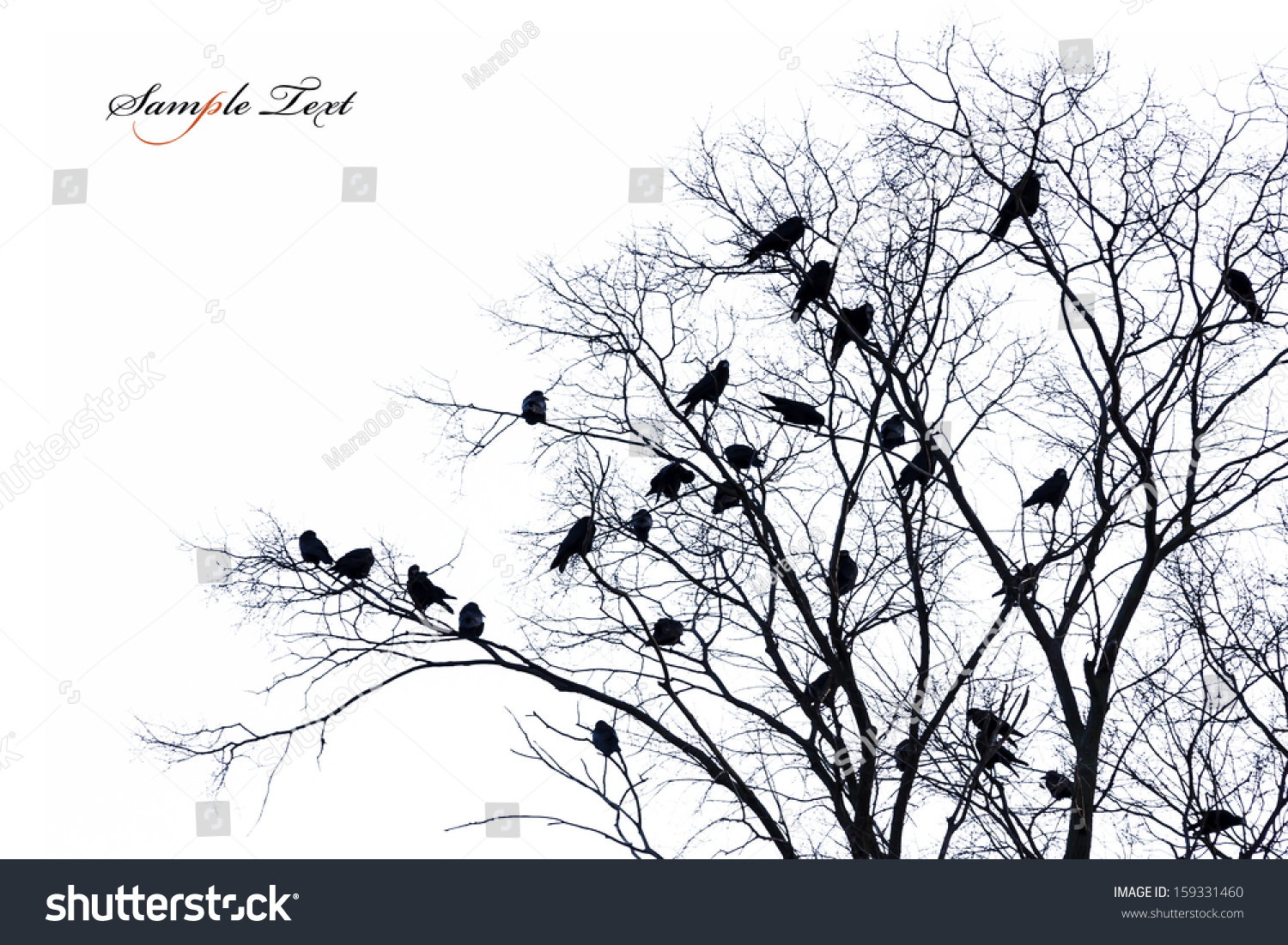 Isolated Tree Silhouette Crows On Branch Stock Photo ...