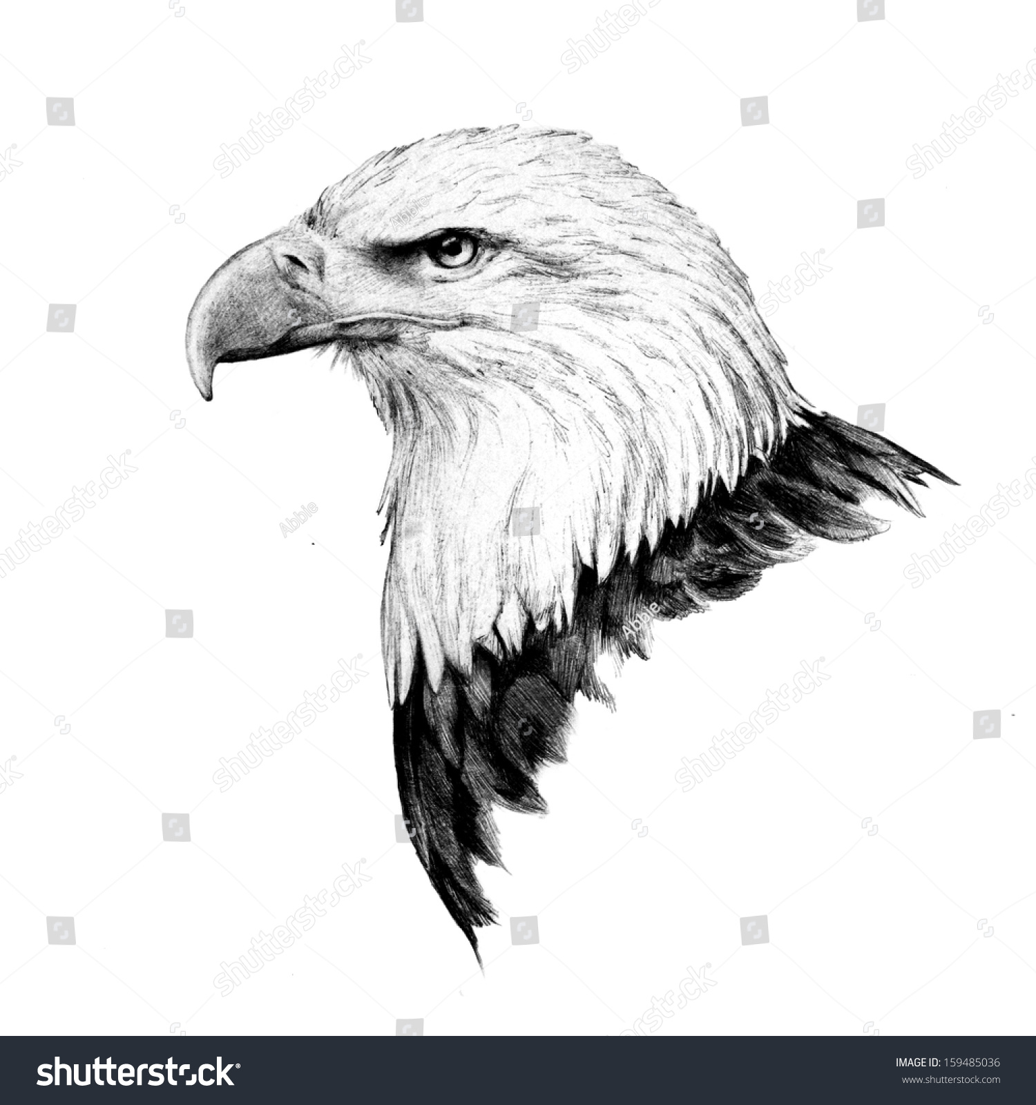 Bald Eagle Head Sketch In A Detailed Side View Drawing Of The United States Americas
