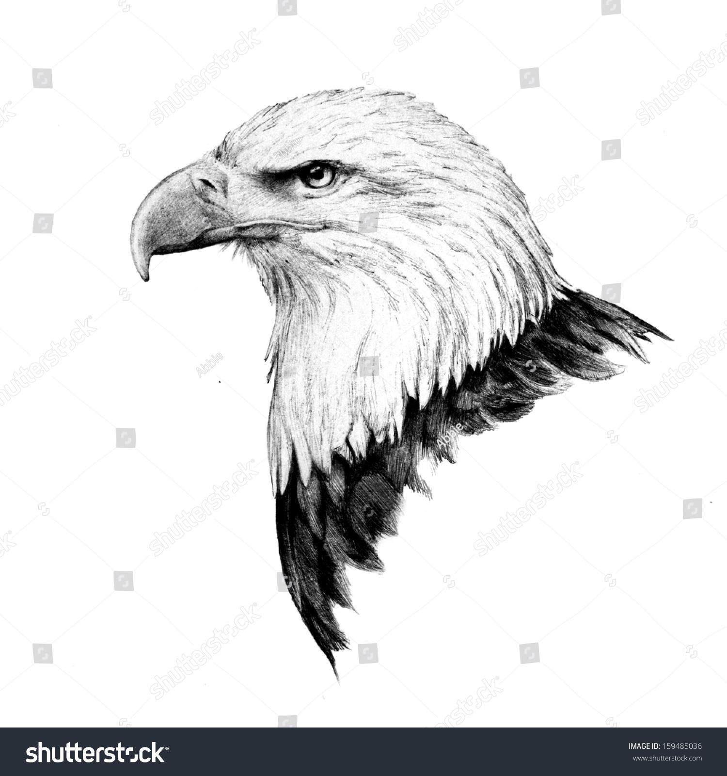 hand drawn bald eagle head sketch stock illustration 159485036
