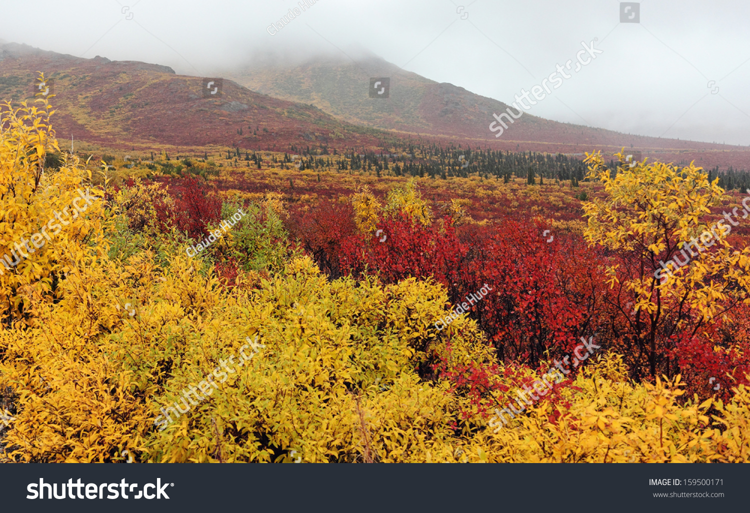 Fall Colors in the rain, Denali National Park, Alaska