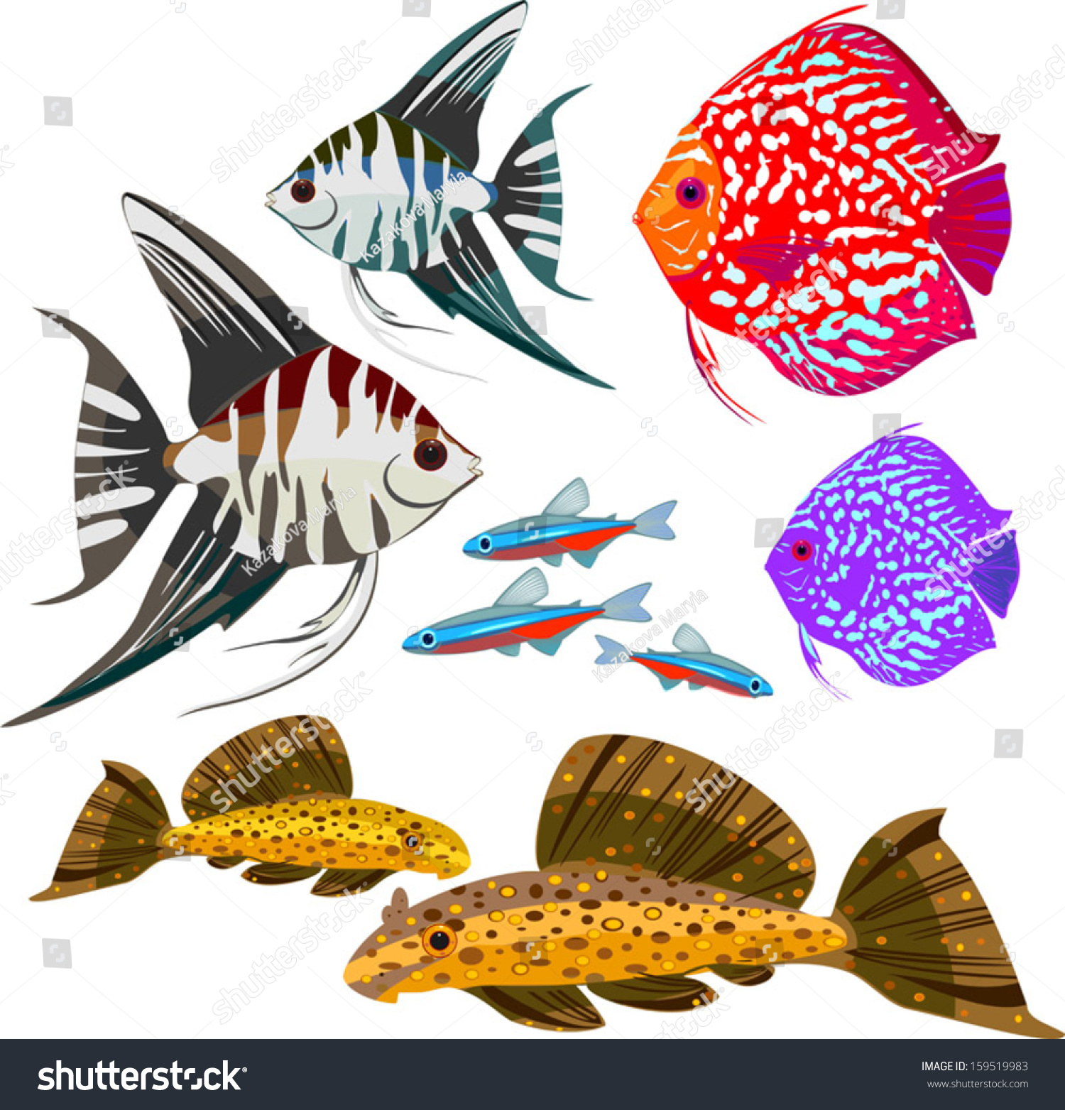 Freshwater fish clipart - Set Of Different Freshwater Aquarium Fishes