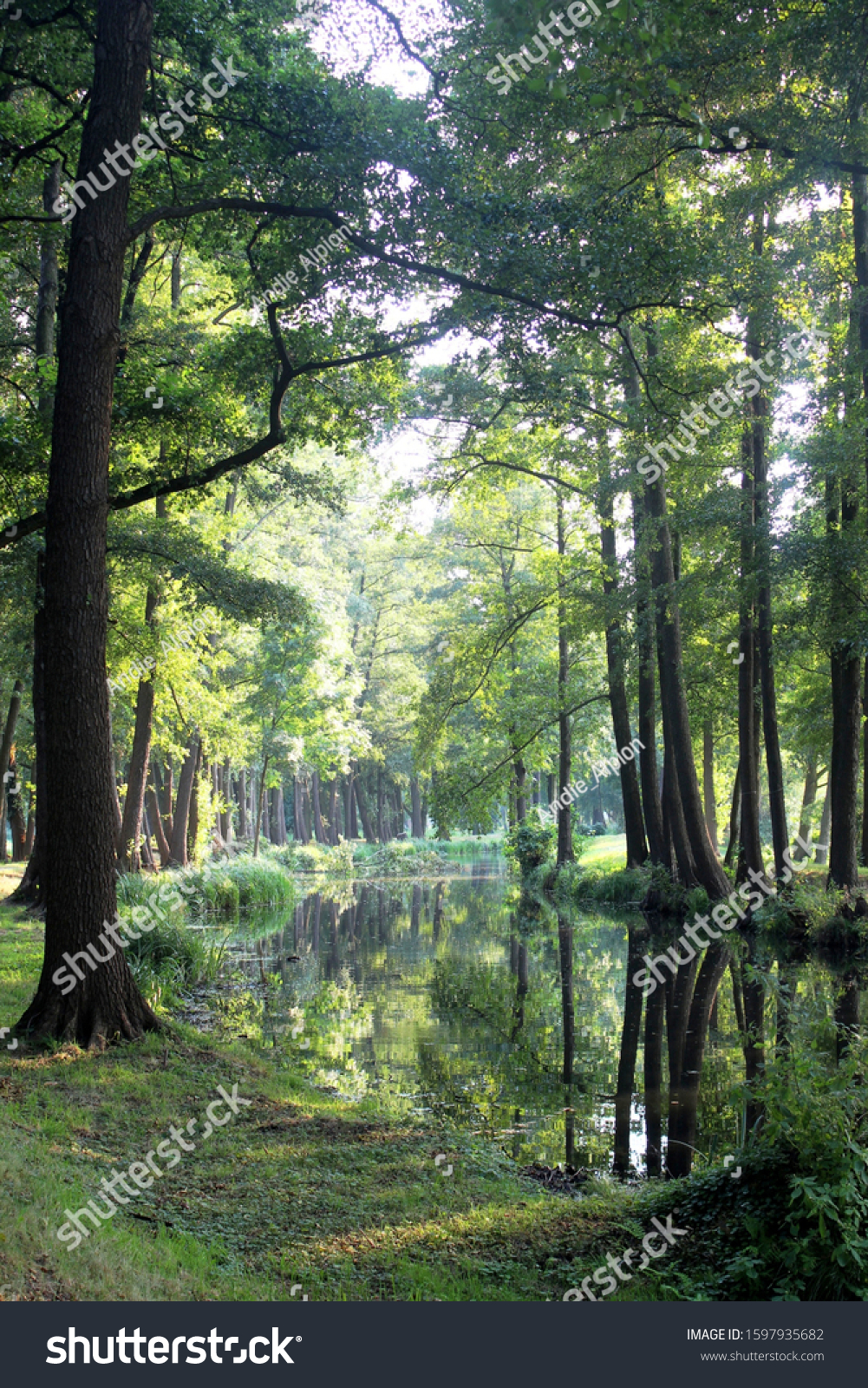 One of thousands of natural and man made water ways in the forest called Spreewald. It's a region in eastern Germany 100 cilometers in the south of Berlin.