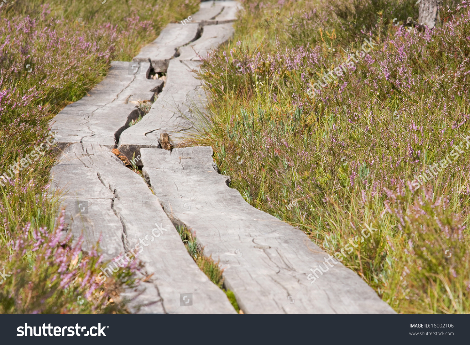 how to make a wooden walk path