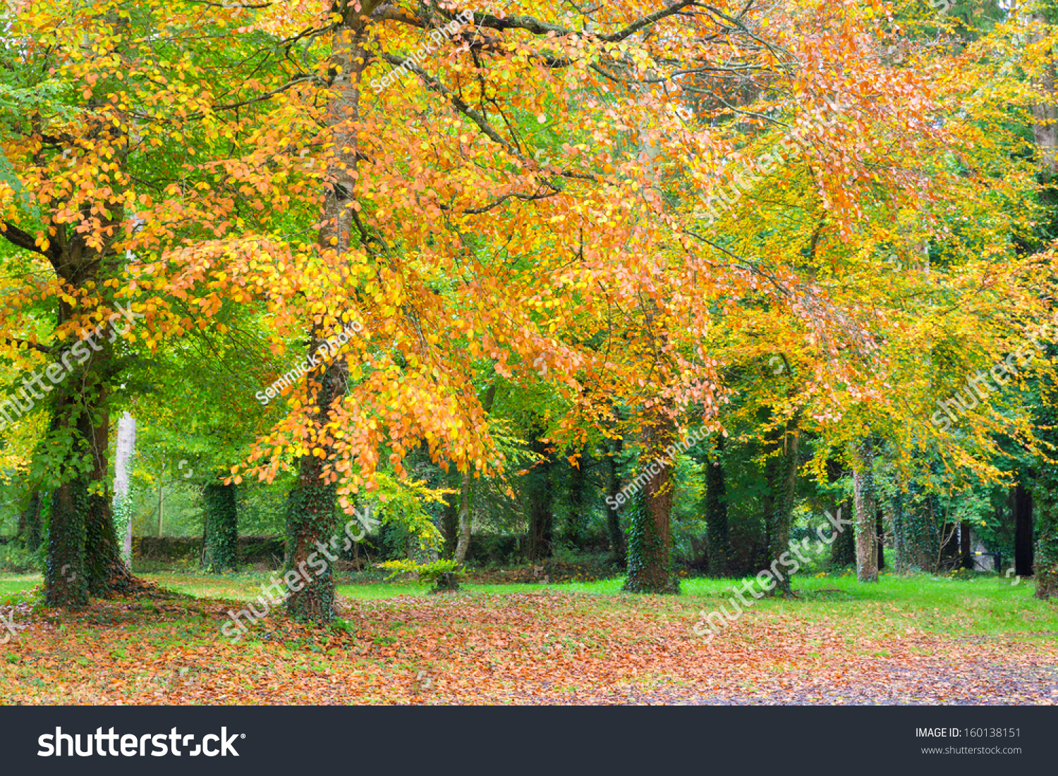 Trees Changing Color Fall Big Forest Stock Photo (Edit Now ...