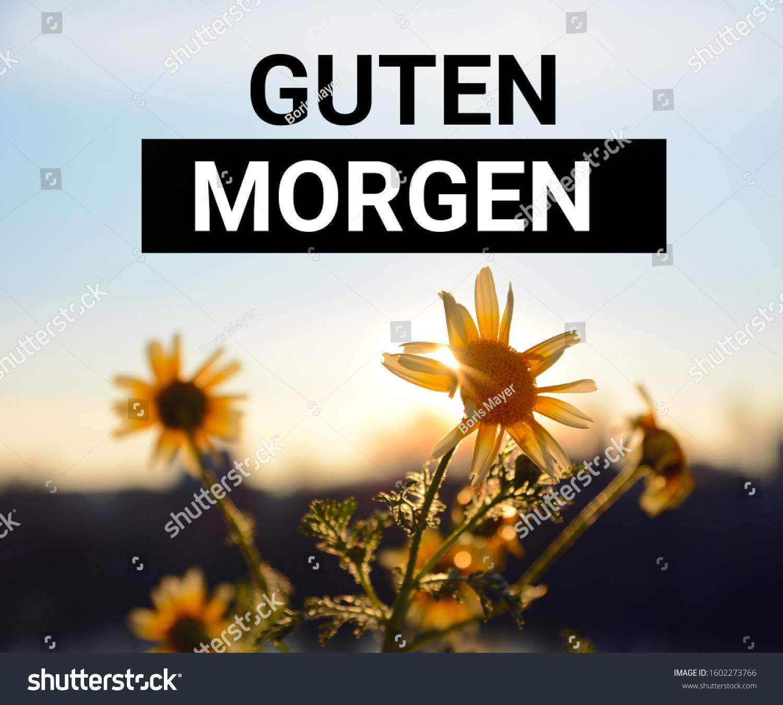 LE SALON DE MUSIQUE  - Page 11 Stock-photo-german-phrase-for-good-morning-guten-morgen-inspirational-motivating-quote-on-a-sunrise-1602273766