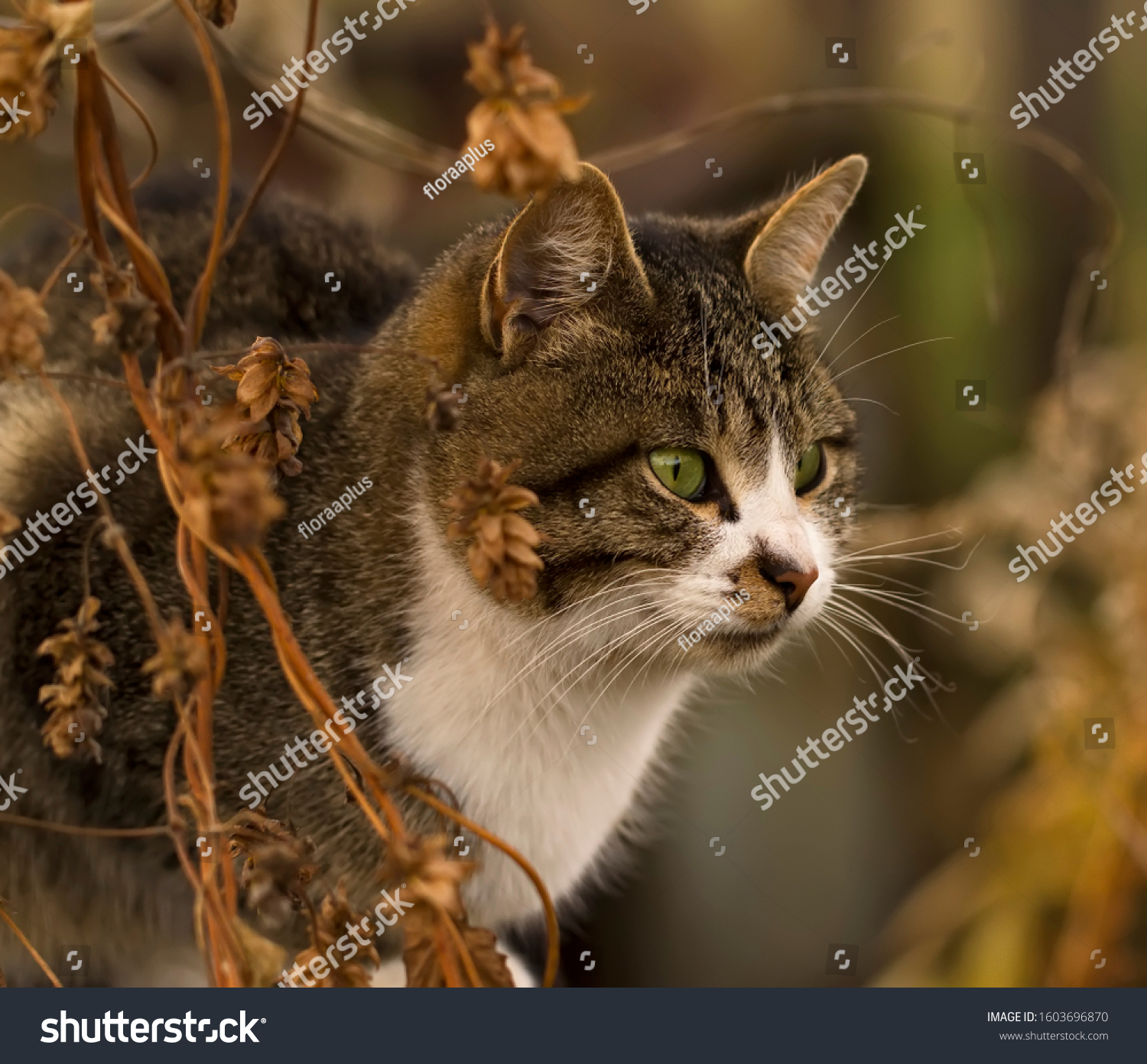 stock-photo-grey-striped-cat-with-green-