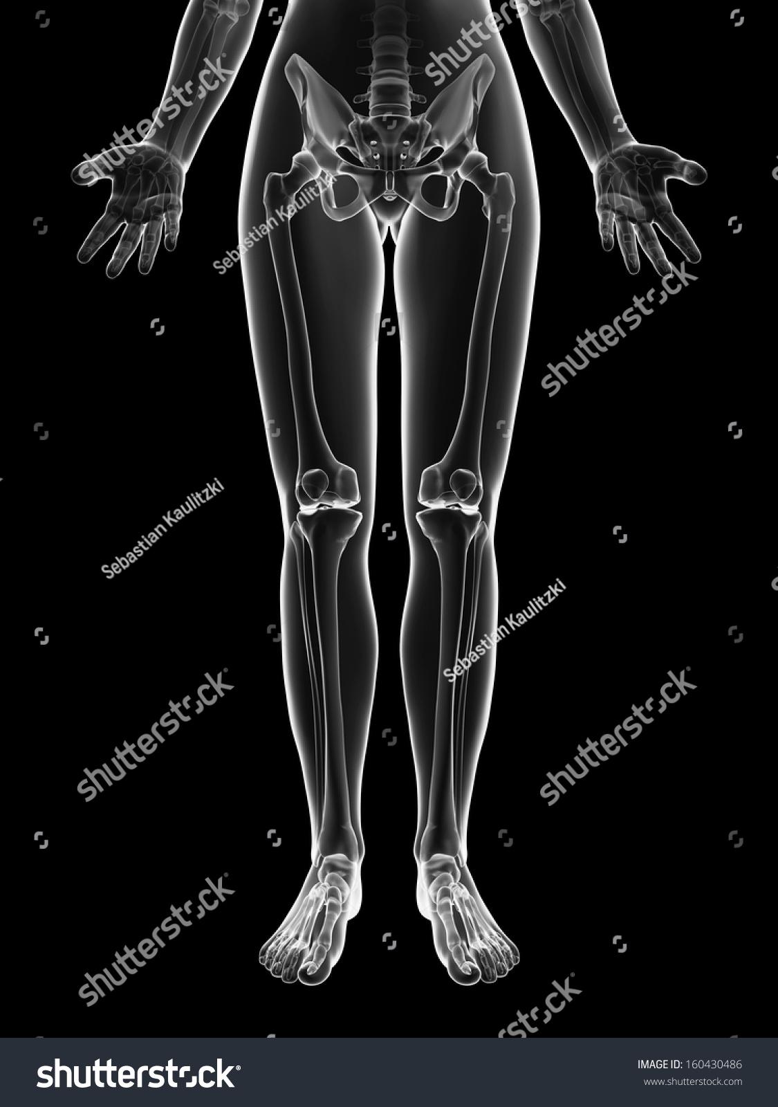 Transparent Female Skeleton Leg Bones Stock Illustration 160430486